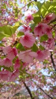 写真2_桜.JPG