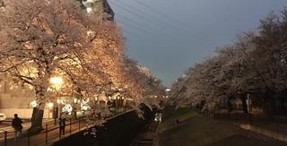 乞田川の夜桜